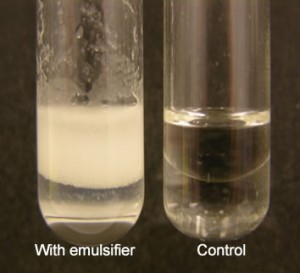 Figure 1. Emulsification of oil by an emulsifier.